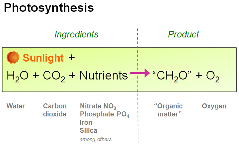 Photosynthesis is a chemical process through which plants, some protists and bacteria, produce glucose and oxygen from carbon dioxide using only light as a source of energy. This glucose, an energy unit, helps trees and plants to survive and grow. And since most living creatures on earth, directly or indirectly, depend on these green trees, the process of photosynthesis is considered as a very important one.