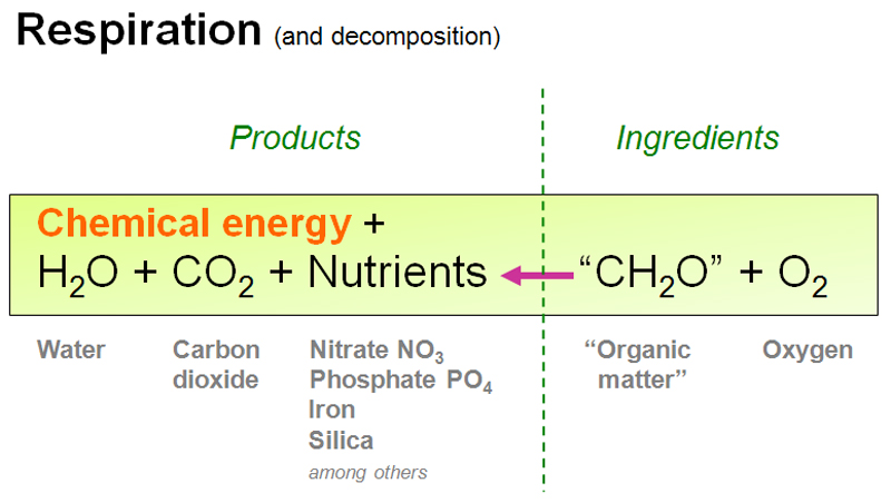 chemosynthesis chemical equation Chemosynthesis chemosynthesis uses energy released from chemical reactions to produce food for organisms the chemical equation for respiration is.