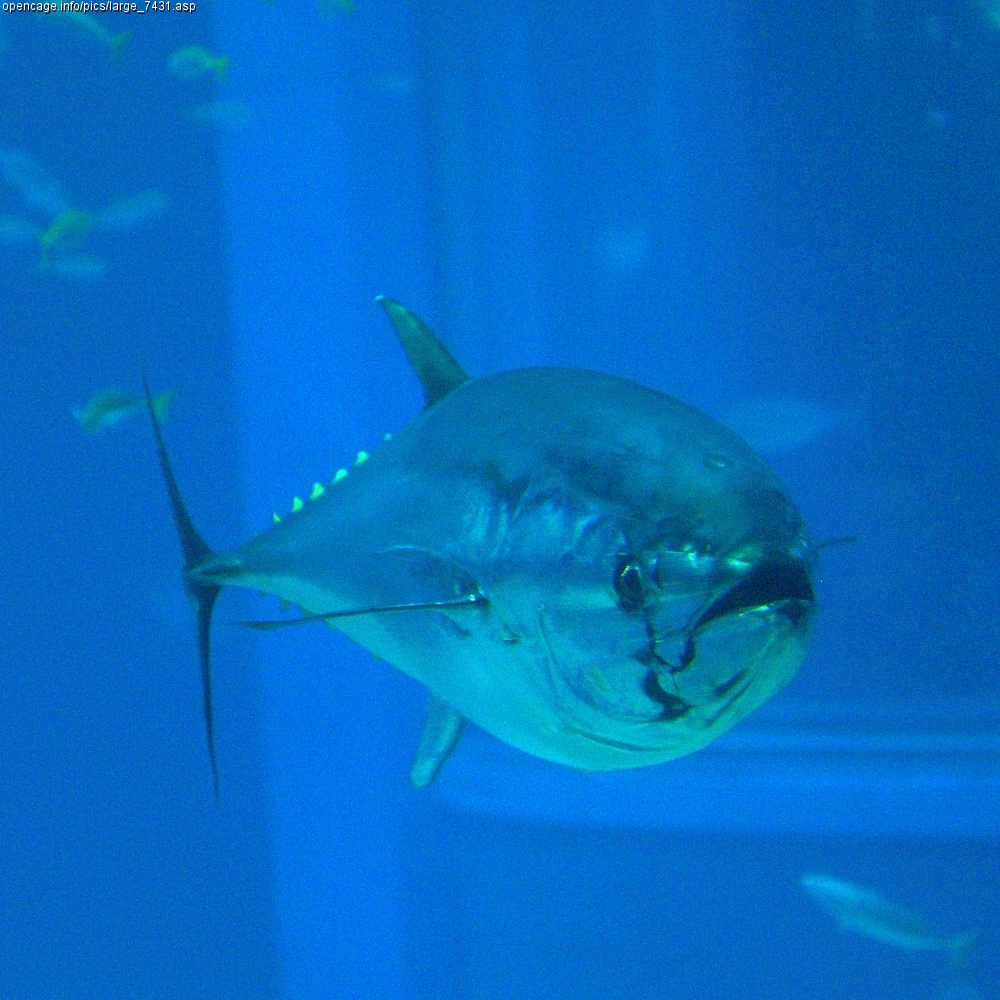 Index of /fishes/kinds/fish_taxa_images