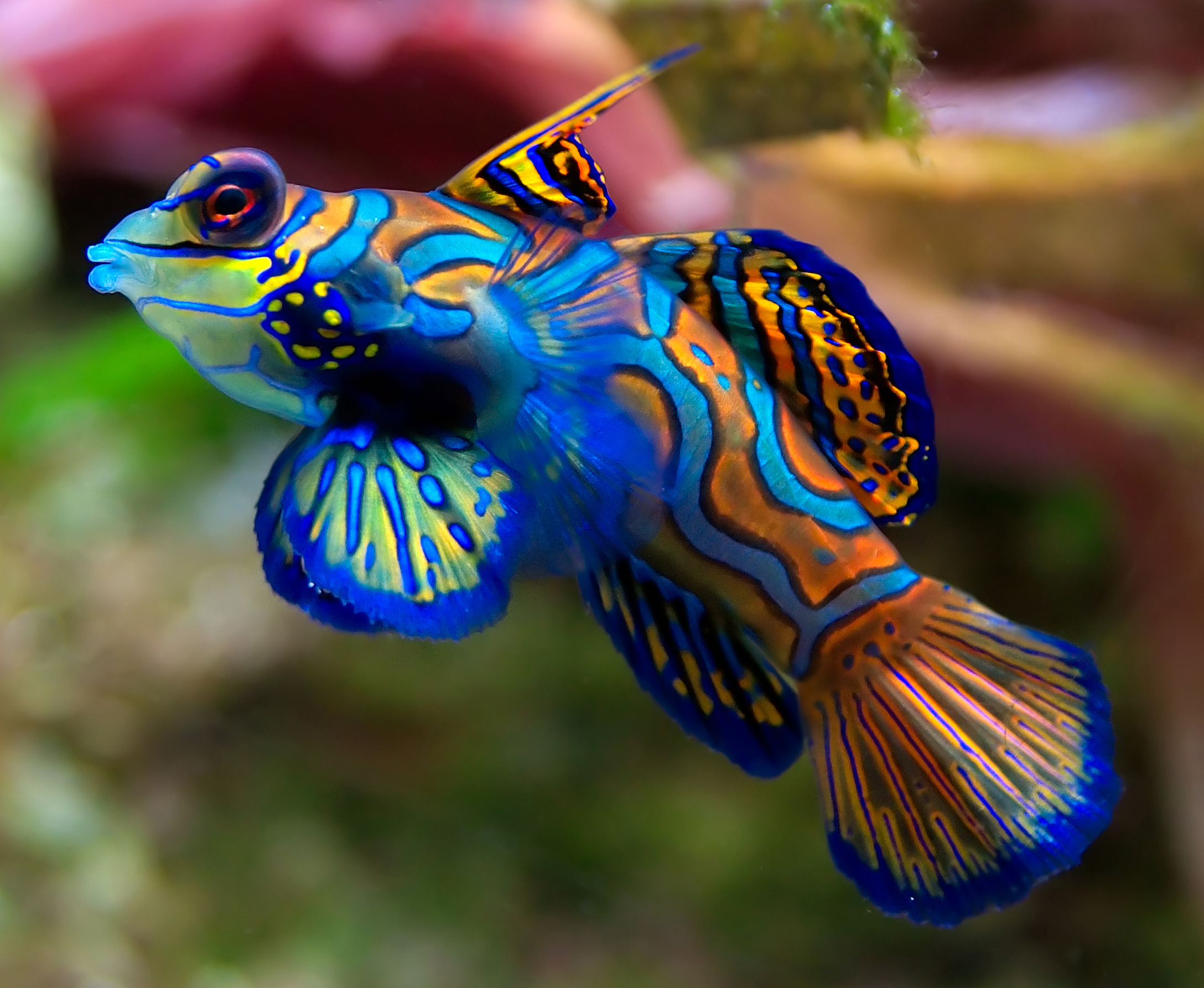 Kinds of fishes for Exotic tropical fish