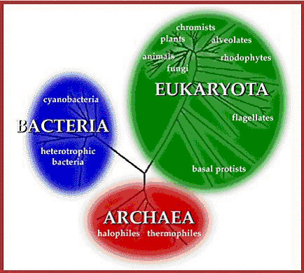 The Three Domains Of Life These Are Currently Divided Into 5 Kingdoms Monera Bacteria Protista A Catch All Category For Eucaryotes That Are Not