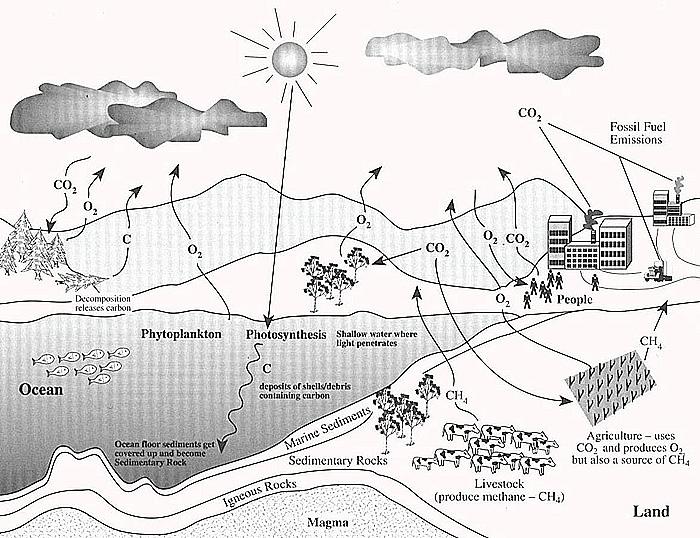 CarbonCycle – Carbon Cycle Diagram Worksheet