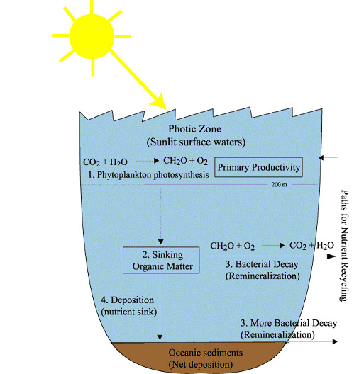 The carbon cycle and climate diagram illustrating the ocean s biological pump 1 carbon dioxide is fixed by photosynthesis 2 this organic matter sinks into deeper waters ccuart Image collections