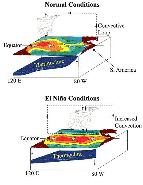 diagram of el nino elninodiagram diagram of el nino #1