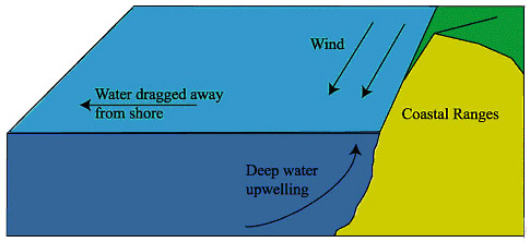 Coastalupwellingdiagram diagram illustrating the principle of coastal upwelling currents created by winds are diverted by the coriolis force and this results in water being ccuart Gallery